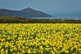 Frightening, these daffodils. Frightening.
